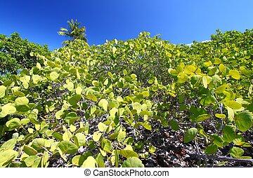 Beef Island - British Virgin Island