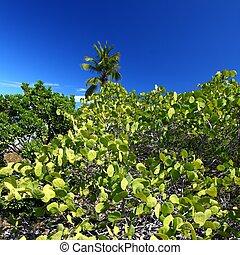 Beef Island - British Virgin Islands