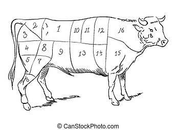 Beef parts - Vector drawing of a beef with cutting parts
