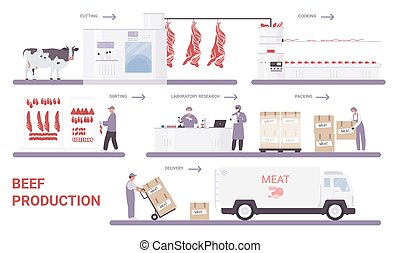 Beef production on meat factory infographic process