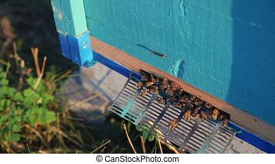 Beehive at sunset. Bees, Hive, Honey, Apiary - Beehive at...