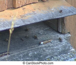 Beehive hole and bees flying inside