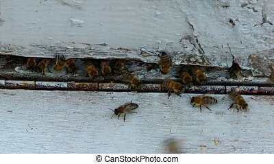 Beehive Honey Home for Bees