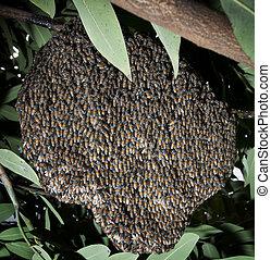 beehive in tree bush