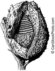 Beehive of Melipona (Stingless bees)