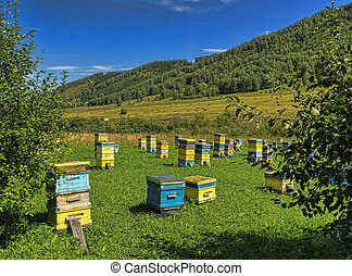 beehives are exposed on a green glade in mountains in the...