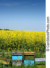 Beehives in the open