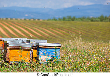 Beehives on the lavender field in Provence, France....