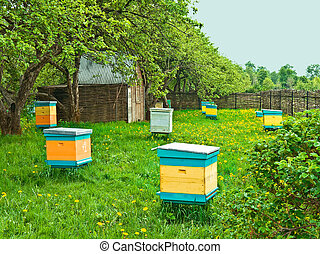 beehives - the bee garden