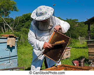 Beekeeper 30 - A beekeeper in veil at apiary among hives....