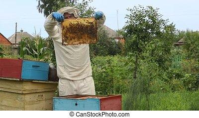 Beekeeper at apiary - Beekeeper in protective workwear ...