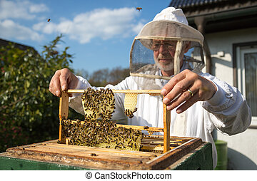 Beekeeper caring for bee colony - Beekeeper checking a...