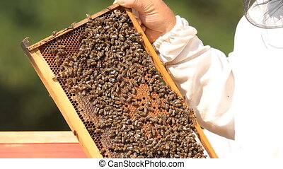 Beekeeper checking frame in beehive - Beekeeper checking...