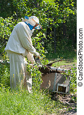 Beekeeper collecting bees hive from birch to the box