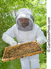 beekeeper holding a frame