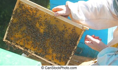 beekeeper holding a honeycomb full lifestyle of bees....