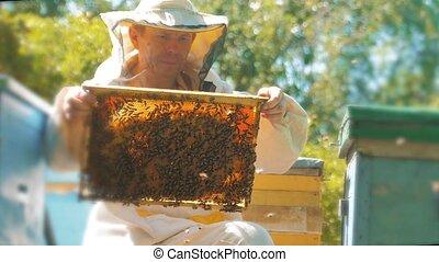 beekeeper holding a honeycomb full of bees. Beekeeper ...