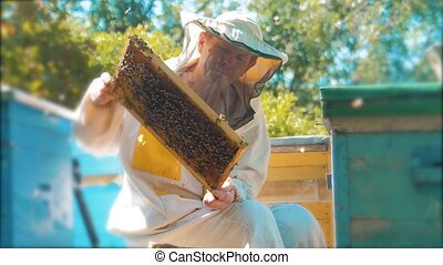 beekeeper holding a honeycomb full of bees. Beekeeper...