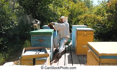 beekeeper holding a honeycomb full of lifestyle bees....