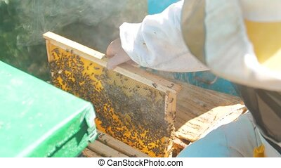 beekeeper holding a honeycomb lifestyle full of bees....