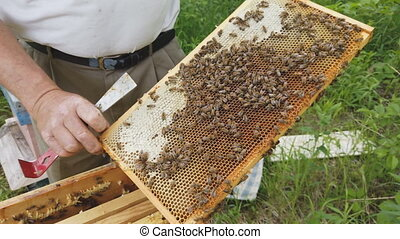 Beekeeper holds a caring for frames near the hives a man ...