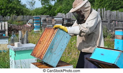Beekeeper in protection suit inspecting his row of beehives ...