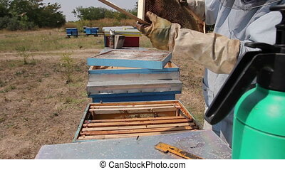 Beekeeper is using bristle to get rid of bees - Apiarist...