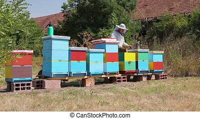 Beekeeper is using bristle to get rid of bees - Apiarist...