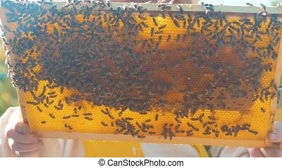 beekeeper lifestyle holding a honeycomb full of bees. ...
