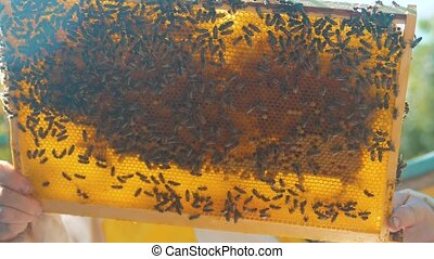 beekeeper lifestyle holding a honeycomb full of bees....