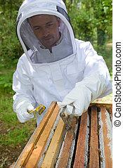 beekeeper lifting a frame
