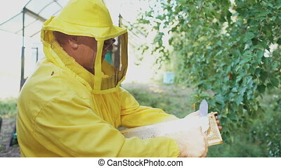 Beekeeper man cut off wax on honeycombs preparing to harvesting honye in apiary