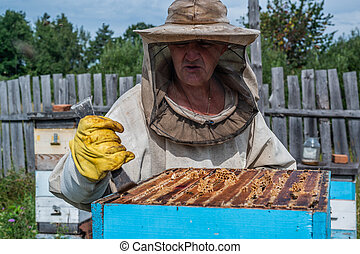 Beekeeper opens the beehouse's cover to take honey out of it