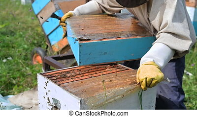 Beekeeper opens the beehouse's cover to take honey out of it...
