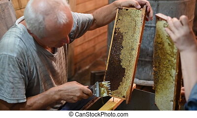 Beekeeper uncapping honey cells on the hive frames with a ...