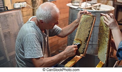 Beekeeper unseals honeycomb with a scraper to remove wax and...