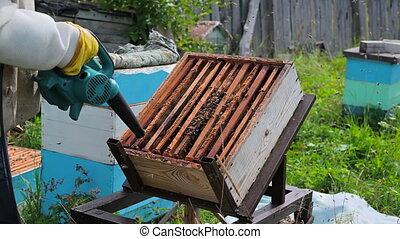 Beekeeper uses air-blowing device to brush bees aside. Bees ...