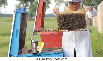 Beekeeper with honeycombs working in apiary