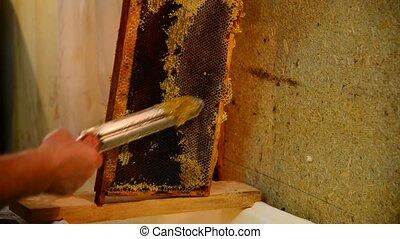 Beekeeper with hot knife cuts wax honeycombs - Beekeeper hot...