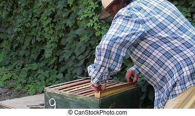 Beekeeper Woman Inspecting Frames - Beekeeper woman...