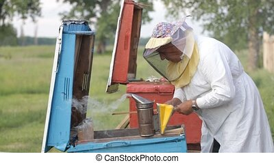 Beekeeper working in apiary - Beekeeper working in the...