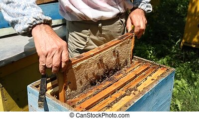 Beekeeper working on beehive with honeycomb. Honey...