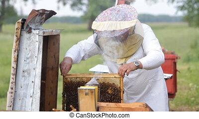 Beekeeper working - Beekeeper with honeycombs working in...