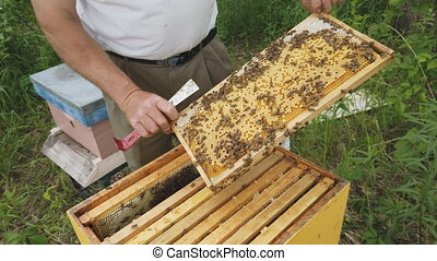 Beekeeper working with bees standing near beehives on the ...