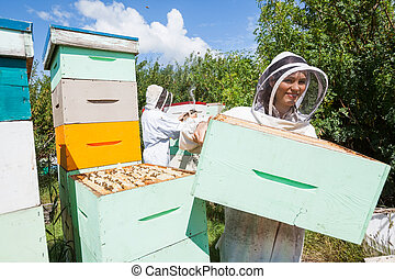 Beekeeper Working With Colleague At Apiary