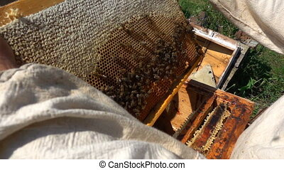 beekeepers inspect a beehive, slow motion - beekeepers...