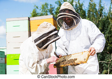 Beekeepers Inspecting Honeycomb Frame At Apiary