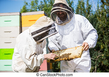 Beekeepers Inspecting Honeycomb Frame