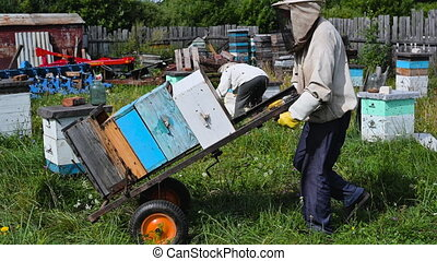 Beekeepers moving hand trolley with bee hives from apiary to...
