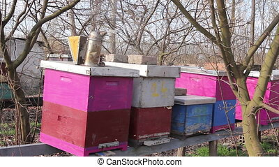 Beekeeper's smoking pot on wooden colorful beehives at early...